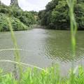 写真: 野池