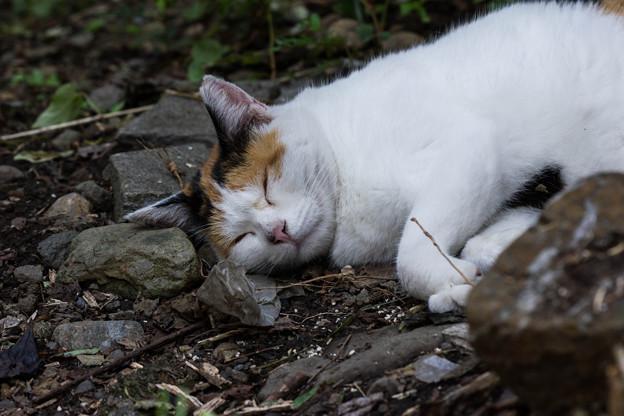 写真: どこでも眠れます
