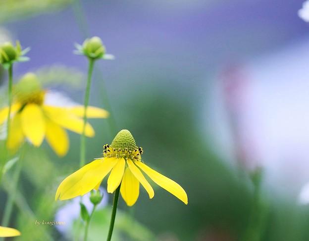 写真: 北の花壇