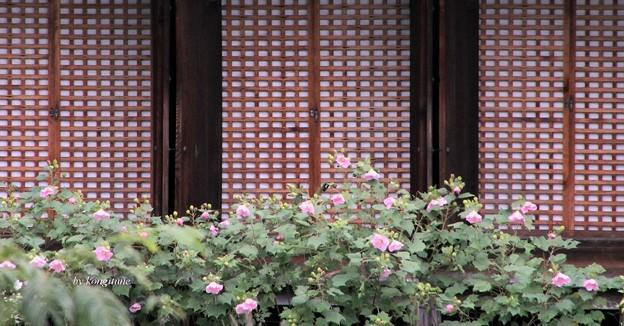 Photos: 浄瑠璃寺