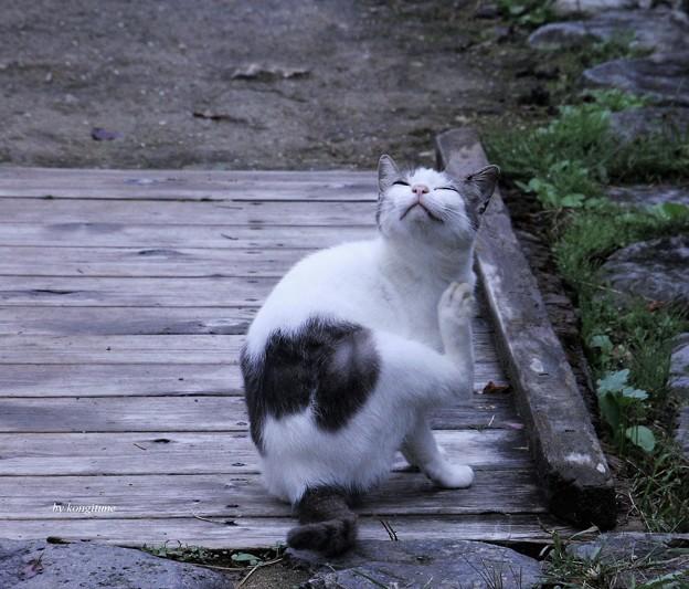 浄瑠璃寺の案内ネコ君