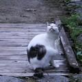 写真: 浄瑠璃寺の案内ネコ君