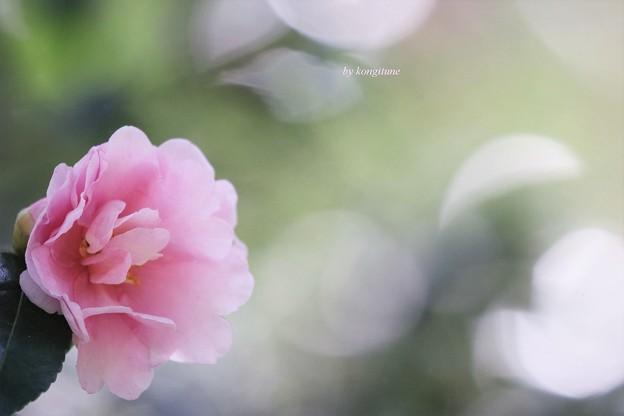 Photos: 霜月