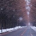 写真: 雪の日