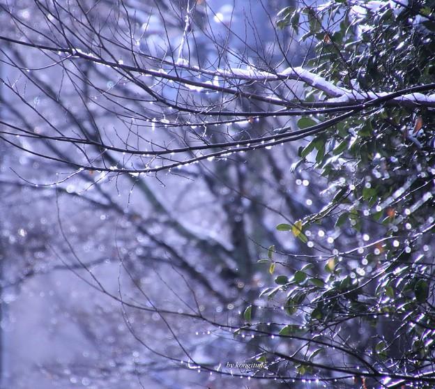 写真: 雪の後