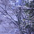 Photos: 雪の後