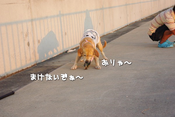 s-myu2009_0823(063)