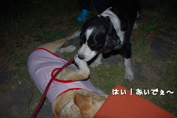 s-myu2009_0831(027)