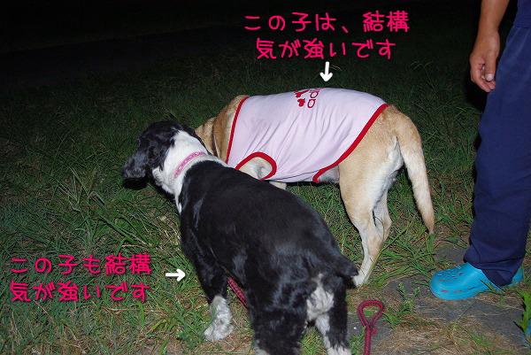 s-myu2009_0831(029)