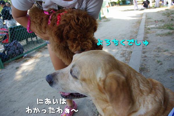 s-myu2009_0906(051)