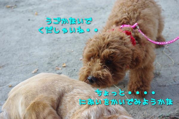 s-myu2009_0906(080)