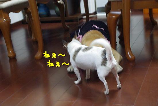 s-myu2009_0913(036)
