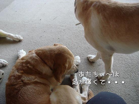 s-myu2009_0927(011)