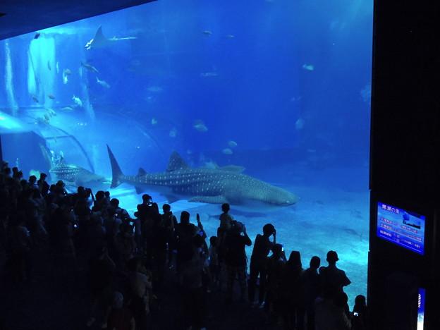2017/10/07 沖縄美ら海水族館
