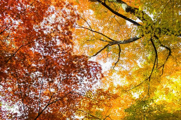秋の彩り01