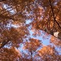 写真: 燃える秋の世界2