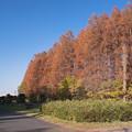写真: 燃える秋の世界3