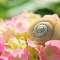 写真: お花畑でひとやすみっ