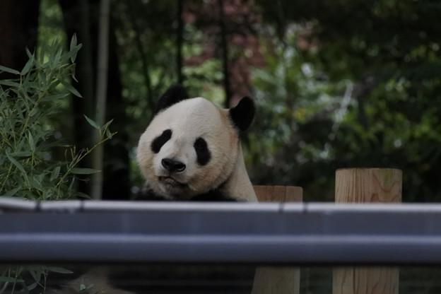 20171018上野動物園NO.13