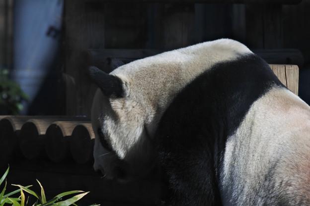 20171213上野動物園NO.3