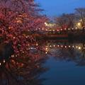 夜 桜 2