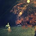 写真: 秋色スワン