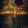 写真: 銀杏落葉