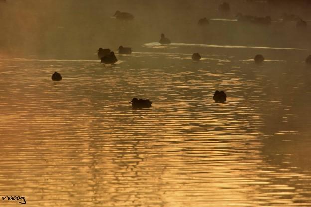 川霧の立つ朝