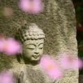 写真: コスモス寺にて♪