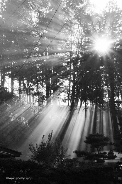 写真: Light in the morning