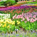 写真: 春色に誘われて