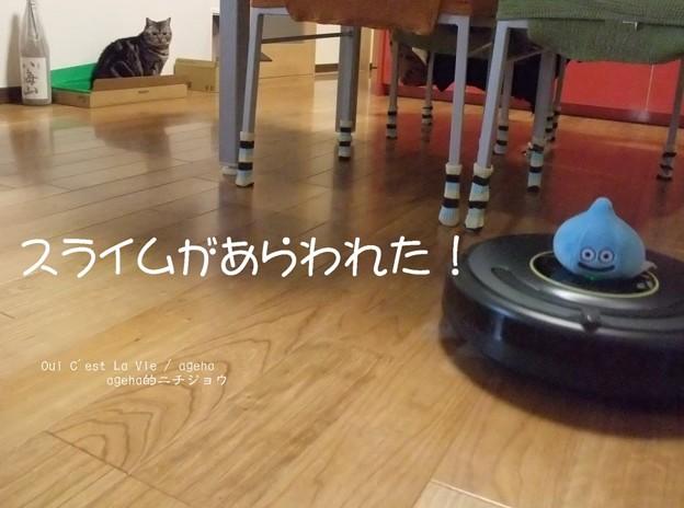 Photos: 猫とルンバとスライムと2