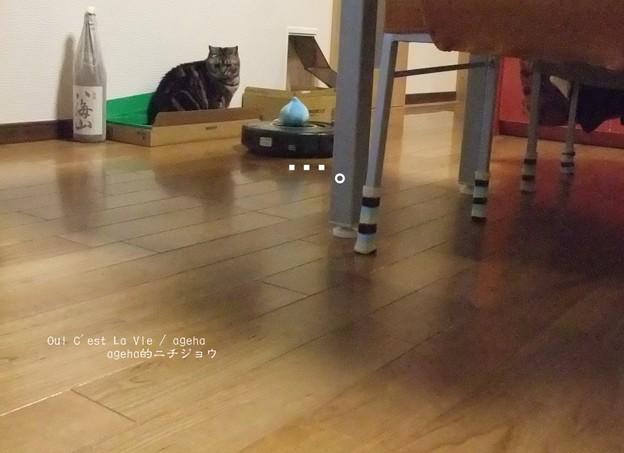 Photos: 猫とルンバとスライムと5