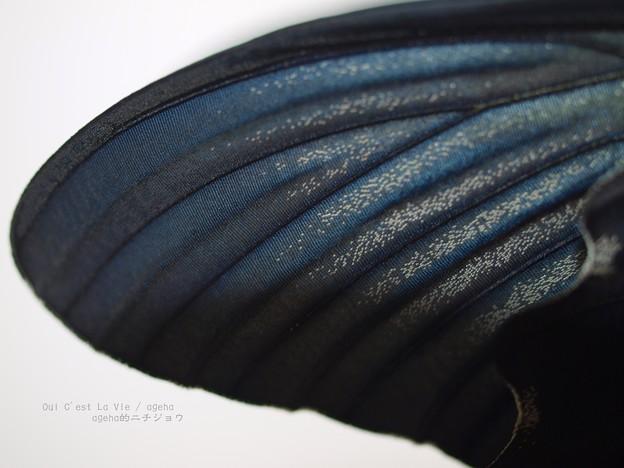 カラスの濡れ羽色。(ナガサキアゲハ)