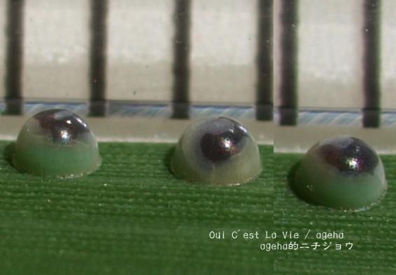 魚卵と同じで動くのが見える。(チャバネセセリ)