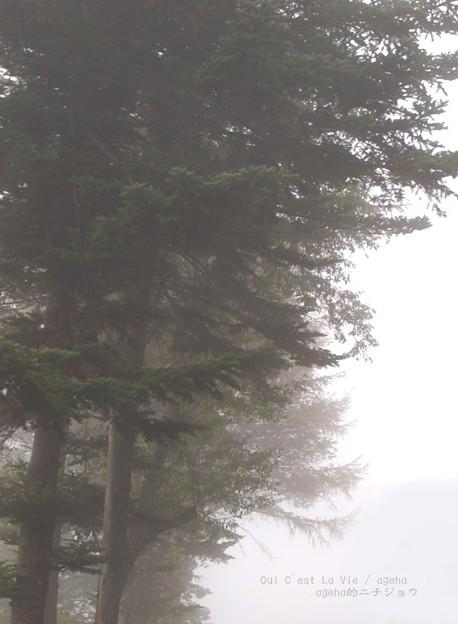 Photos: 不思議だ、霧の中を歩くのは!(霧の中)