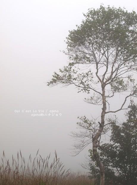 Photos: 人生とは孤独であることだ。(霧の中)