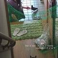 Photos: 猫を無視する鳩ぽっぽ。