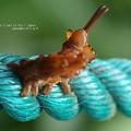 Photos: もう何が何だか。(バイバラシロシャチホコ 幼虫)