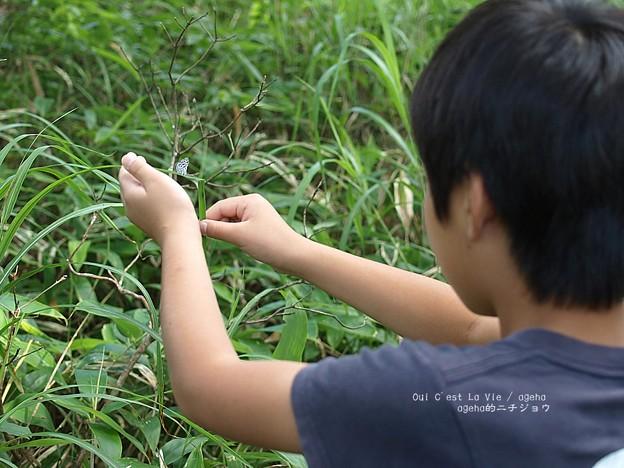 Photos: 風揺れを防ぐは我が甥っ子。(ゴイシジミ)