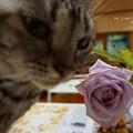 Photos: バラが咲いたよ。(ブルームーン)