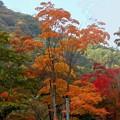 色様々の紅葉