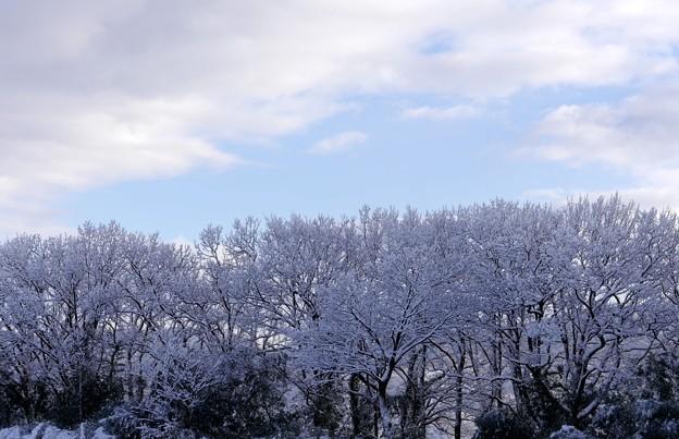 雪の花満開