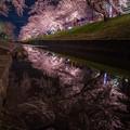 写真: 千本桜の夜