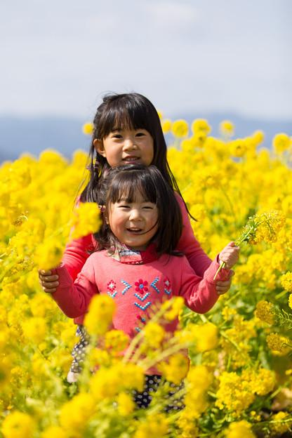 写真: 春色の中で
