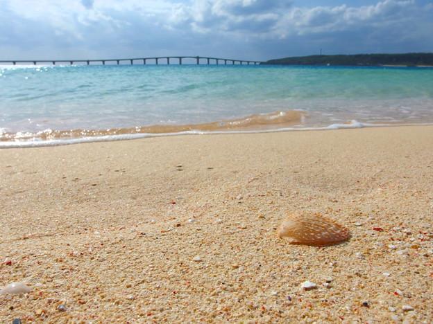 貝殻は外套膜から分泌されるのです^^
