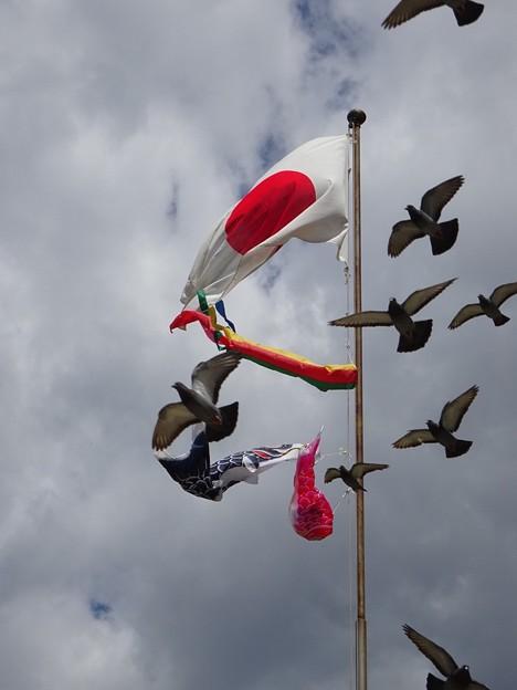 旗と鳩と鯉