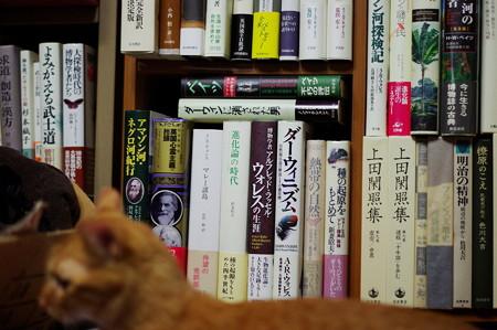 寝室の愛読書の棚とトラちゃん(3歳)
