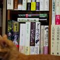 写真: 寝室の愛読書の棚とトラちゃん(3歳)