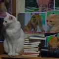 2017年4月21日のシロちゃん(雌4歳)とスコちゃん(雄4歳)